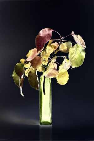 Autumn bouquet in vase on black background. photo