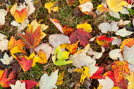 Colorful autumn leaves on the ground. Background. photo