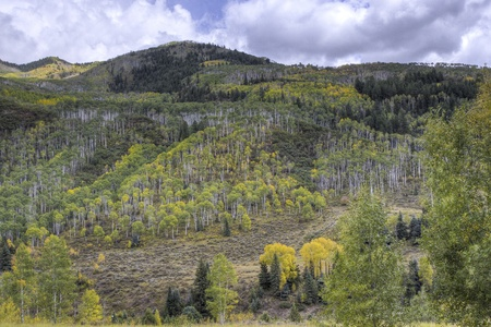 Autumn forest on mountains slopes. Colorado, USA photo