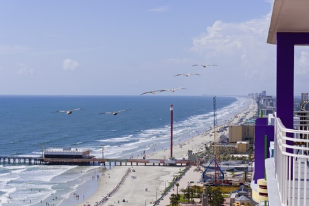 View of ocean beach and pelicans in flight photo