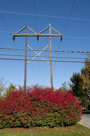 burning bush: Electrical poles above red burning bush Stock Photo