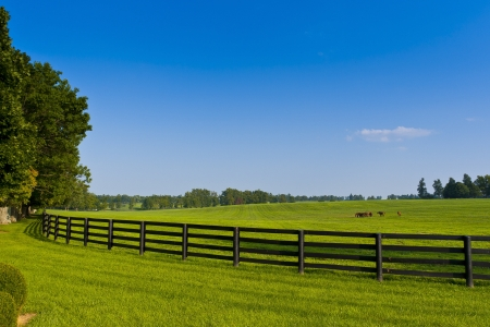 pasture fence: Green pastures of  horse farms