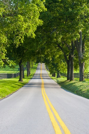 Country road surrounded the horse farms Archivio Fotografico