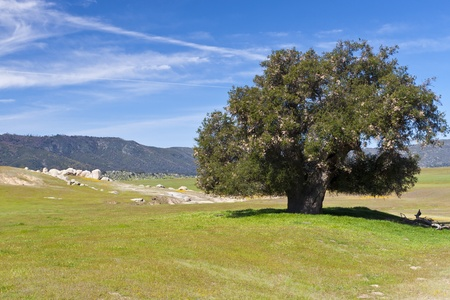 View of  a beautiful valley with big tree and stones. California, USA Stock Photo - 11989634