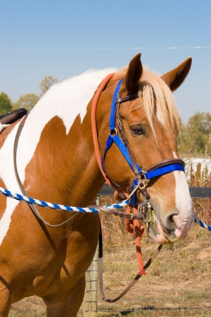 Horse ready for grooming Stock Photo - 17014084