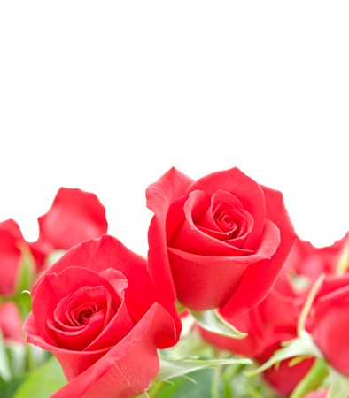 Flowers of red roses on white background  selective focus