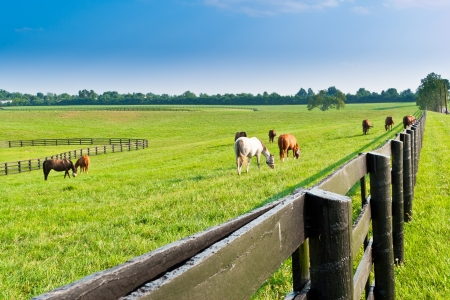 kentucky: Green pastures of  horse farms  Country summer landscape  Stock Photo