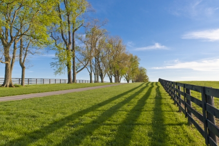 Green pastures of  horse farms at spring photo