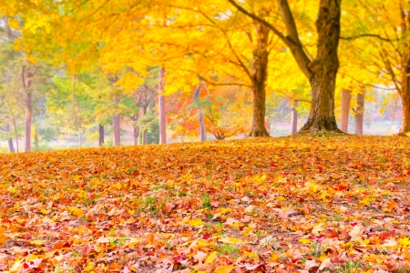 Colorful autumn leaves with forest blurred background  selective focus photo