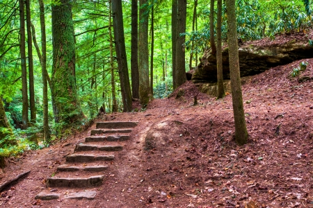 Old stone stair in the mystic woods. photo