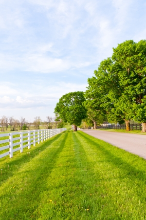 pasture fence: Country road surrounded the horse farms at spring