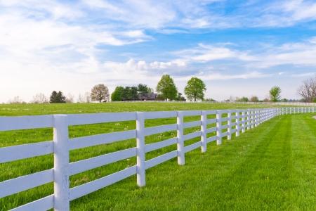 馬の農場の緑の牧草地。国の夏の風景です。