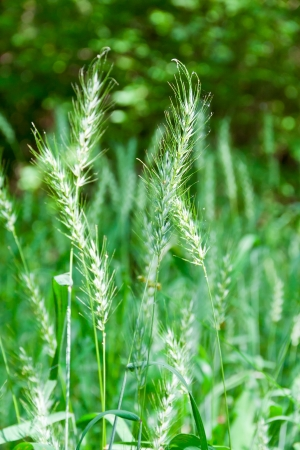 Summer field green nature background  selective focus photo