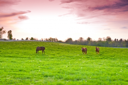Dramatic sunset sky at country site. Horses at farmland. selective focus photo