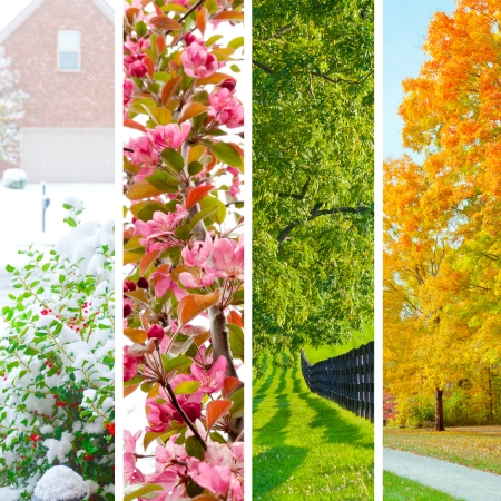 four seasons: Four seasons collage.  Set of beautiful landscapes at  winter, spring, summer and autumn. Stock Photo