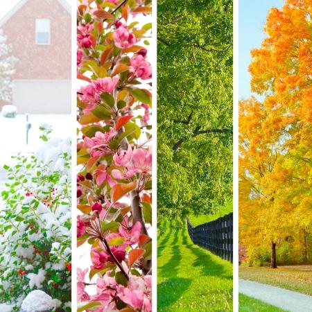 Vier Jahreszeiten Collage. Satz von schönen Landschaften im Winter, Frühling, Sommer und Herbst. Standard-Bild - 22704368