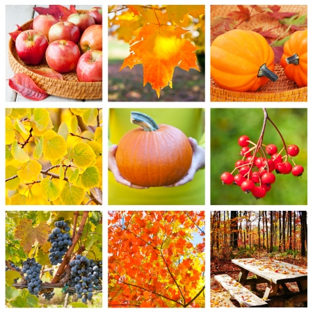 Autumn nature collage, collection of beautiful seasonal images  photo