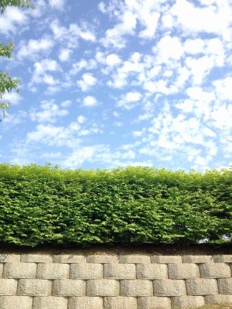 Sky groene haag en steen haag. Rijen van verschillende vormen texturen en kleuren. Stockfoto