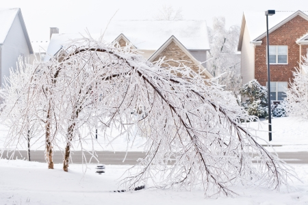 Trees bent over from the weight of the ice  after freezing rain  photo