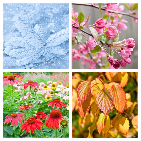 Four seasons collage   Set of beautiful nature at  winter, spring, summer and autumn  photo