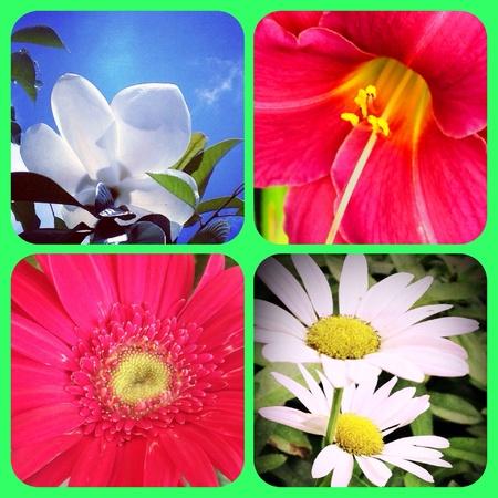 lilia: Set of spring flowers close up