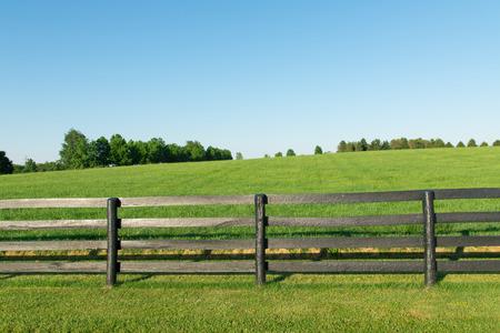 黒い木の塀の国の夏の風景を馬の農場の緑の牧草地