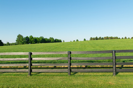 Green pastures of horse farms with black wooden fence  Country summer landscape  Stock Photo
