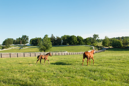 colt: Mare with her colt in pastures of horse farms  Country summer landscape