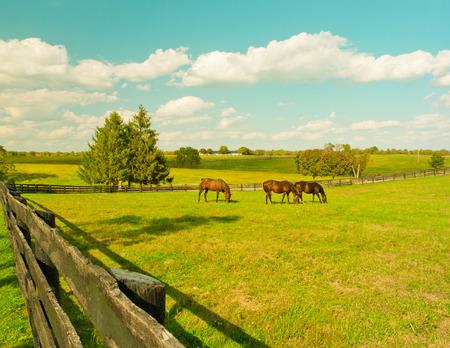 rancho: Caballos en el prado Paisaje del país del verano de la vendimia tonificados Foto de archivo