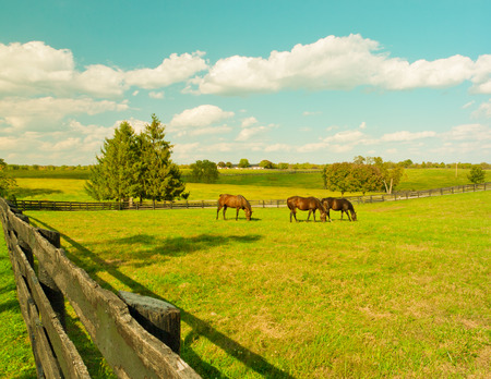 Horses in meadow  Country summer landscape  Vintage toned  Stock Photo