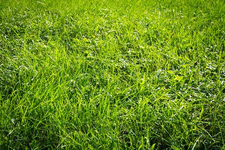 vignette: Green grass background with vignette