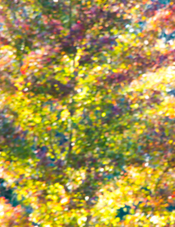Autumn tree in park out of focus, natural blurred  bokeh background. Stock fotó