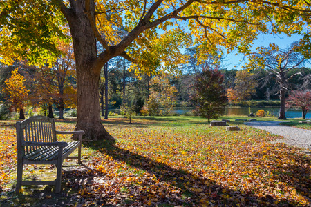 Meadow in autumn park with bench under big tree.