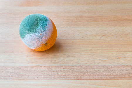 spoilage: Moldy rotten orange fruit on wooden table.