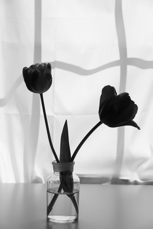 love life: Silhouette of two tulip flowers in glass vase against window in black and white.