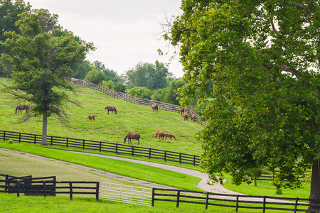 horse fly: Horses wearing fly masks in summer at horse farm. Country landscape. Stock Photo