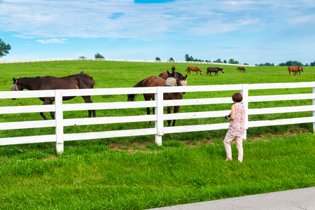 female photographer: Female photographer taking picture of country landscape with horses. Stock Photo