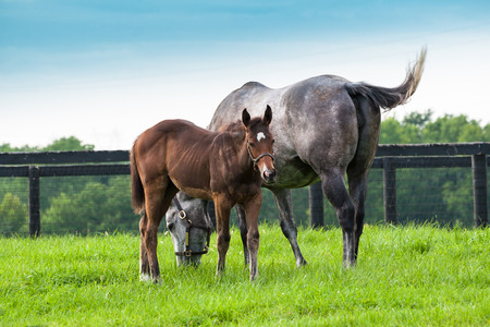 Mare with her colt on pastures of horse farms. Country summer landscape. Stock Photo