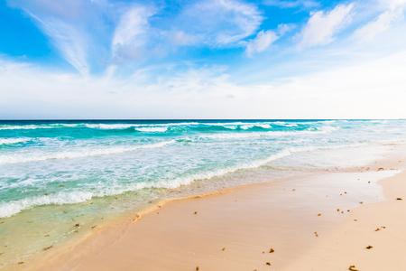 seaweeds: Ocean with seaweeds, white sand beach, Caribbean sea, Cancun, Mexico.