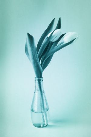 antique vase: Antique blue tone image of tulips in vase. Stock Photo