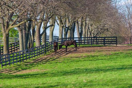 vanishing point: Horses at horse farm. Country spring landscape. Stock Photo