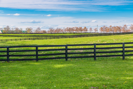 vanishing point: Green pastures of horse farms. Countryside spring landscape.