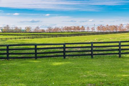 Groene weiden van het paard boerderijen. Platteland voorjaar landschap.