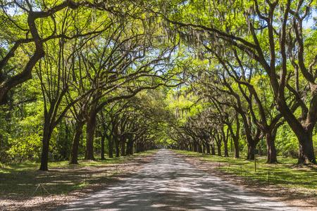 arboleda: Largo camino llena de robles antiguos envueltos en musgo español en la histórica plantación de Wormsloe en Savannah, Georgia, EE.UU.