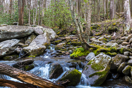 Forest creek. Water cascades over moss covered rocks in Great Smoky Mountains National Park. Фото со стока