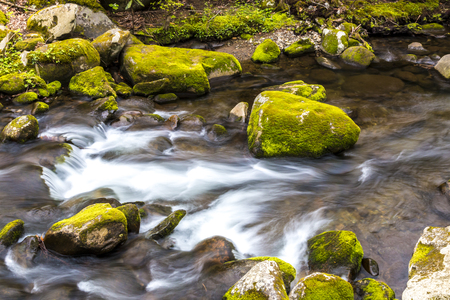 great smoky national park: Forest creek. Water cascades over moss covered rocks in Great Smoky Mountains National Park. Stock Photo