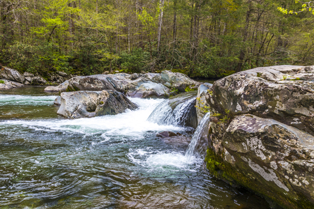 great smoky national park: Forest creek. Water cascades over rocks in Great Smoky Mountains National Park.