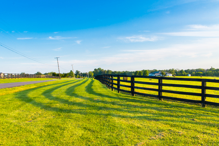 fenceline: Green pastures of horse farms with fence line and shadow along a country road. Countryside summer landscape.