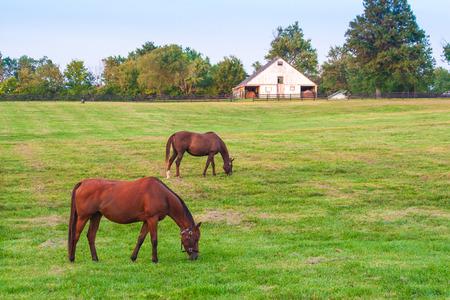 Horses at horse farm. Country landscape. Stock Photo
