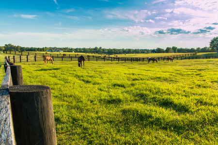 Green pastures of horse farms. Country summer landscape at evening golden hour. Stock Photo